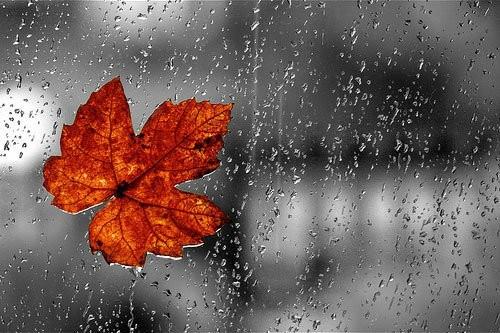 Status buồn không có tình yêu nào là mãi mãi, chỉ có những khoảnh khắc yêu nhau là mãi mãi