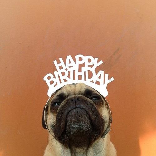 """Tổng hợp stt chúc mừng sinh nhật của bạn thân cười """"không nhặt được mồm"""""""