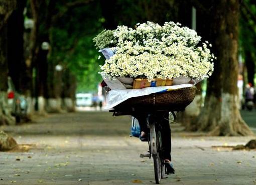 Status hay về cúc họa mi viết cho loài hoa thanh yên, trong sáng của tháng 11