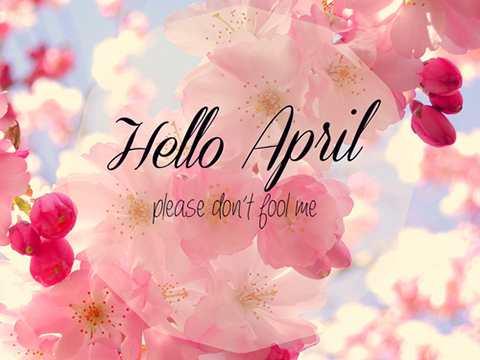 Những stt đón chào tháng 4 mùa hoa loa kèn mùa của những hoài niệm vấn vương