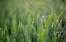 Chùm những câu ca dao dân ca hay và trữ tình về mưa