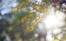 Stt tháng 10 về với những cơn gió thu chớm lạnh và những cái nắng dịu dàng