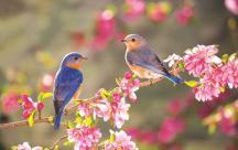STT xuân về Có những mùa Xuân từ trong tiềm thức, với những thước phim cũ kỹ nhuốm màu của thời gian