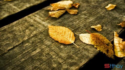 Stt nắng mùa thu, nắng tháng 8 cùng những cơn mưa bất chợt cảm xúc mùa thu luôn khiến ta xao xuyến
