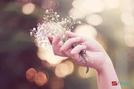Status tâm trạng Em còn yêu những loài hoa lan man hương tháng tám