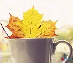 Status tháng 8 mùa thu hay, ý nghĩa làm tâm hồn xao động