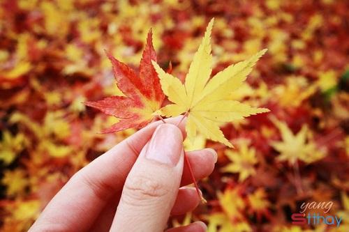 Tháng 9 về, cùng nhau đọc những status hay nhất về mùa thu