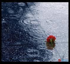 Stt Tháng 6 về với những cơn mưa bất chợt