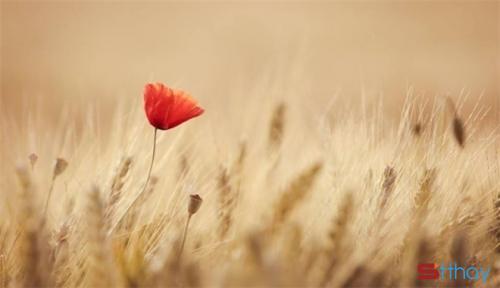 Status chân lý cuộc sống Trưởng thành là một hành trình cô đơn, thật sự rất cô đơn!