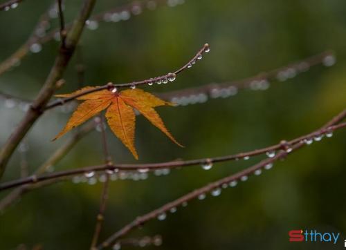 Stt hay cảm nhận về mưa mùa thu và những nỗi buồn không tên