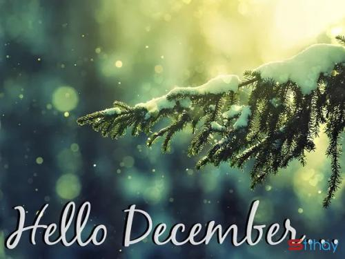 Status chào tháng 12 ta cảm thấy chông chênh giữ những ngày lạnh cuối năm