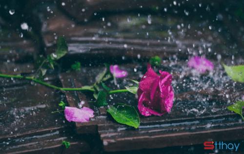 STT hoa đẹp rồi hoa cũng tàn, tình đẹp tình vẫn tan