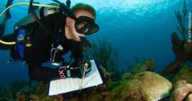 Lisa Terry surveys a reef. (Photo by John Melendez)