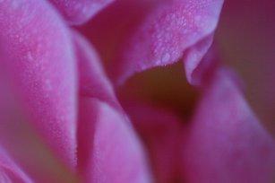 Close Up 12