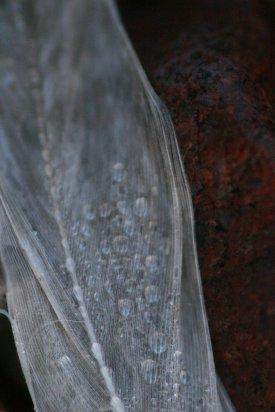 Close Up 14