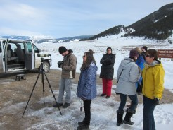 On a naturalist tour to view big horn sheep, bison and, of course, elk.