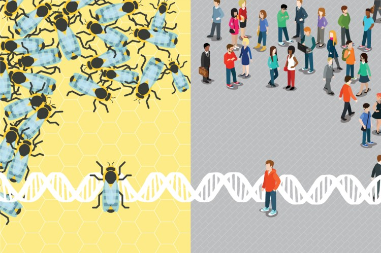 Socially unresponsive bees share something fundamental with autistic humans, new research finds.
