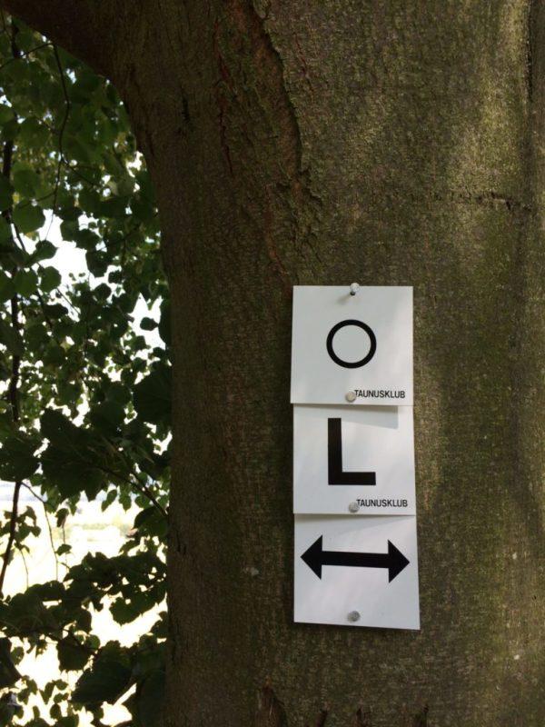 Mit Aluminium-Nägeln werden die Markierungen am Baum angebracht