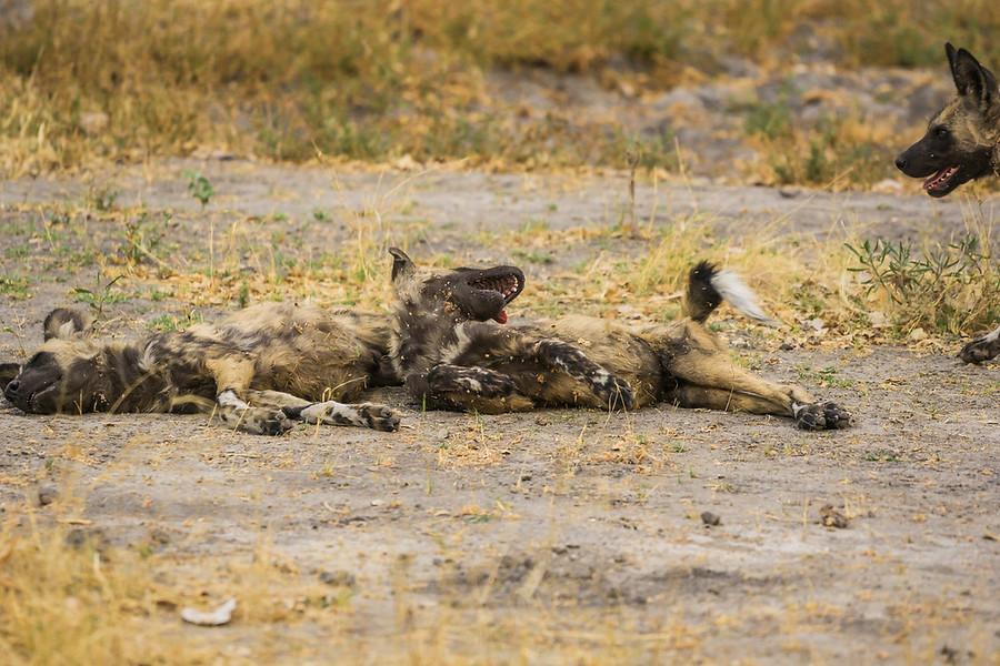 Botswana Amaze (230 of 2505)-9