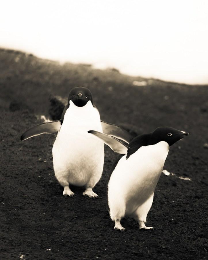 Projectile Penguin Poop – Stuck in Customs