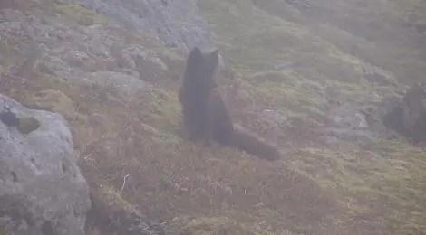 A fox on guard.