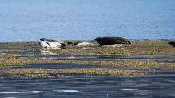 Seals just chilling out.
