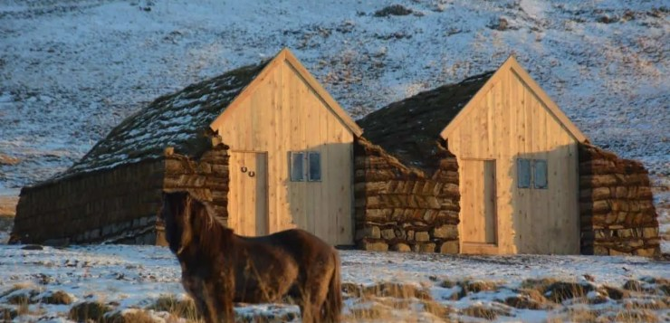 Meet Icelandic farm animals up close and personal. An Icelandic horse and a traditional turf house at Lýtingsstaðir.