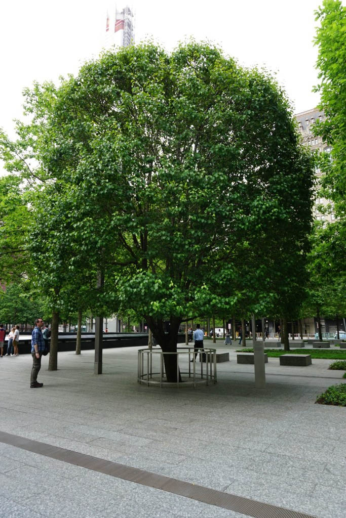 The survivor tree at the 9/11 Memorial. This memorial is a must for a weekend in New York City.