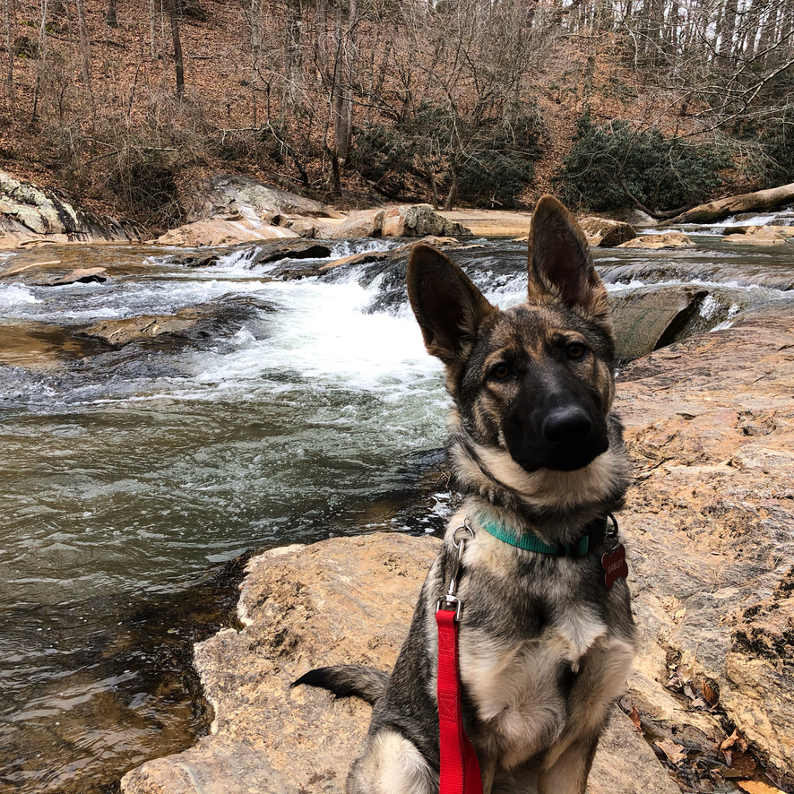 Dog in front of a small waterfall