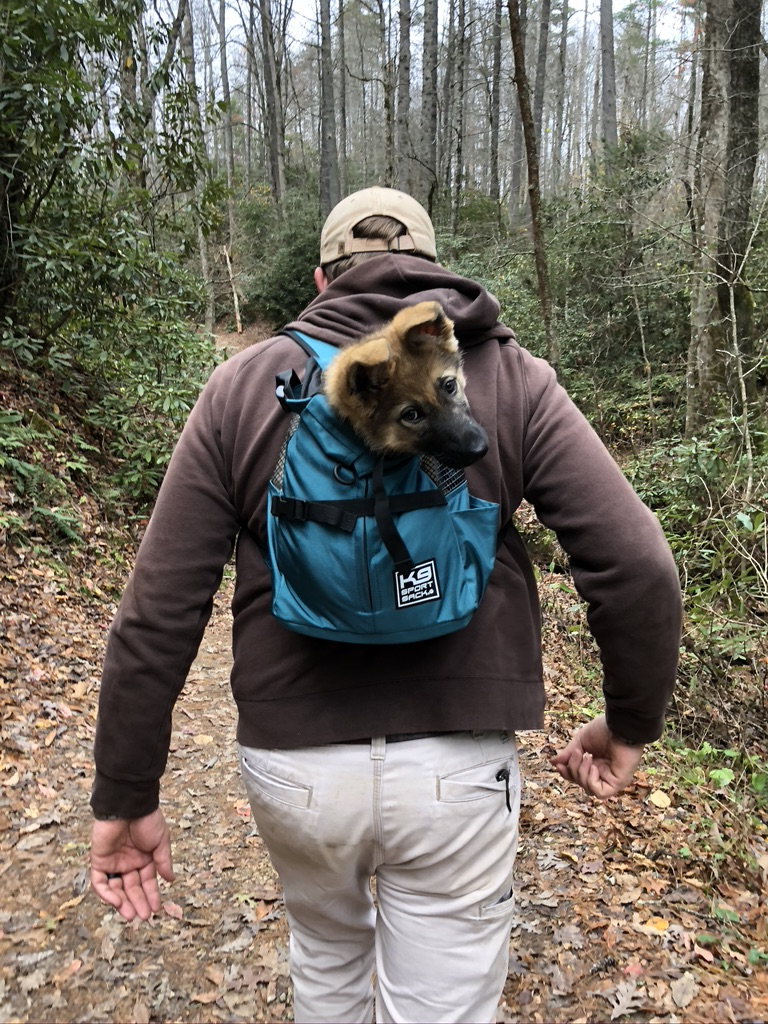 man carrying dog in a backpack while tent camping with dogs