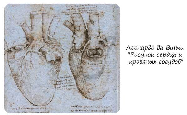 Леонардо да Винчи Рисунок сердца и кровяных сосудов