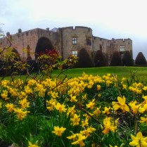 Chirk Castle amid a field of springtime daffodils