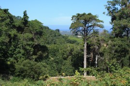 Monserrate Valley