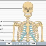 Learn human body functions by Interactive video simulations – Get Body Smart
