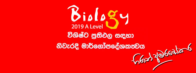 Sinhala Essays For Grade  Exam German Grade  English Exam Essay Ol Maths Model Paper