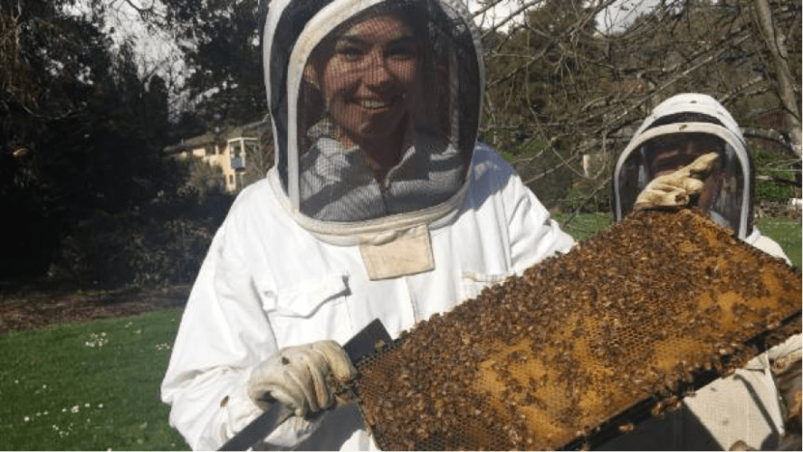 Beehive Initiative at Nelson College