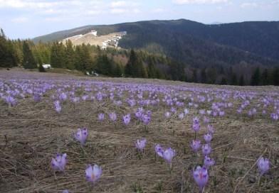 Горчанский национальный парк