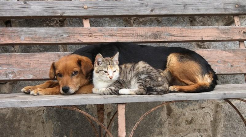 Почему в Польше нет бездомных животных?