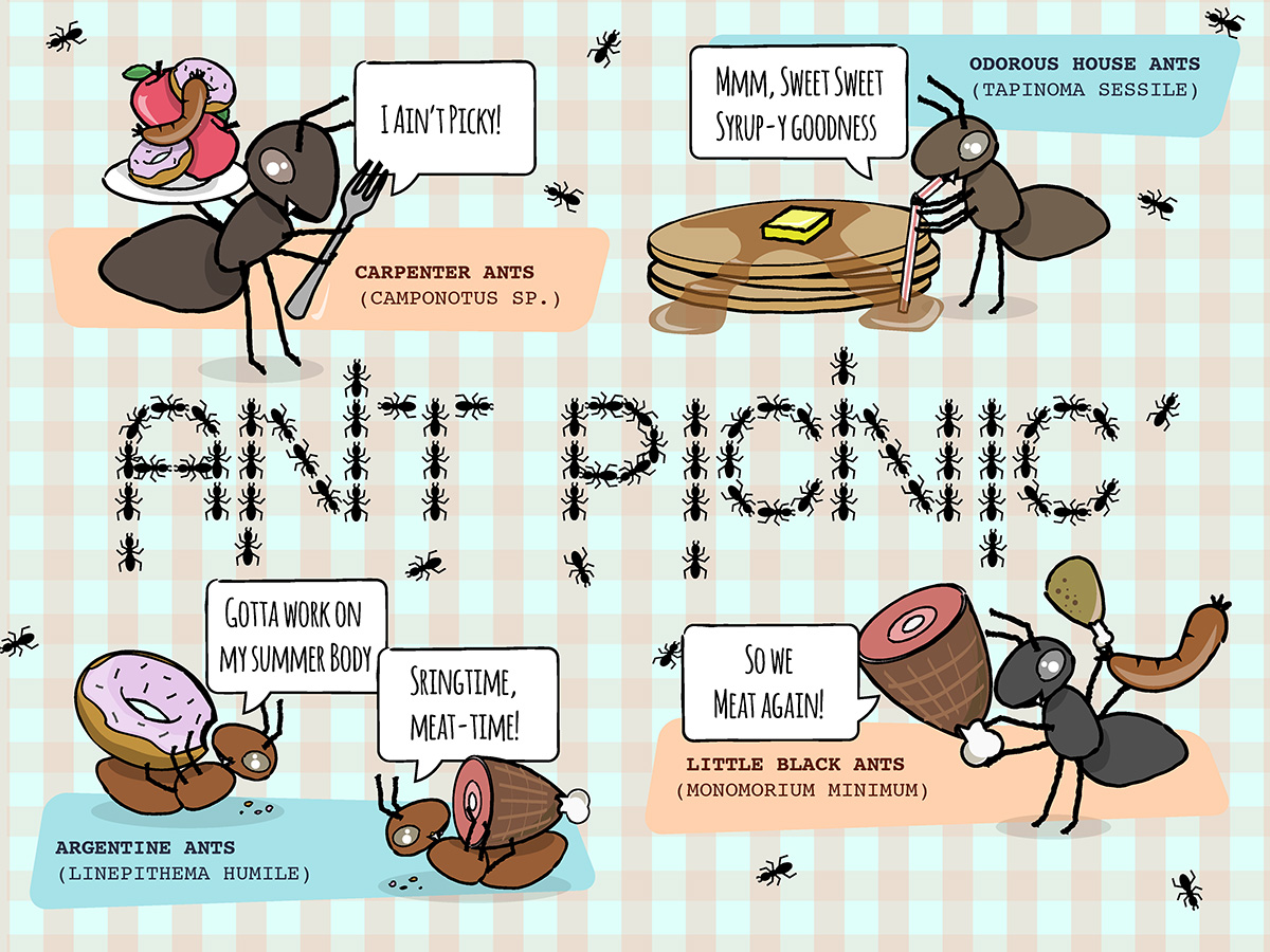 Ant Picnic Students Discover