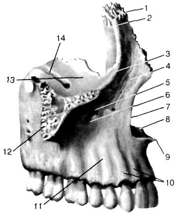 Каналы височной кости и их содержимое