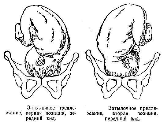 Проведение бимануального исследования у беременной алгоритм. Бимануальное исследование в гинекологии: показания, особенности проведения процедуры