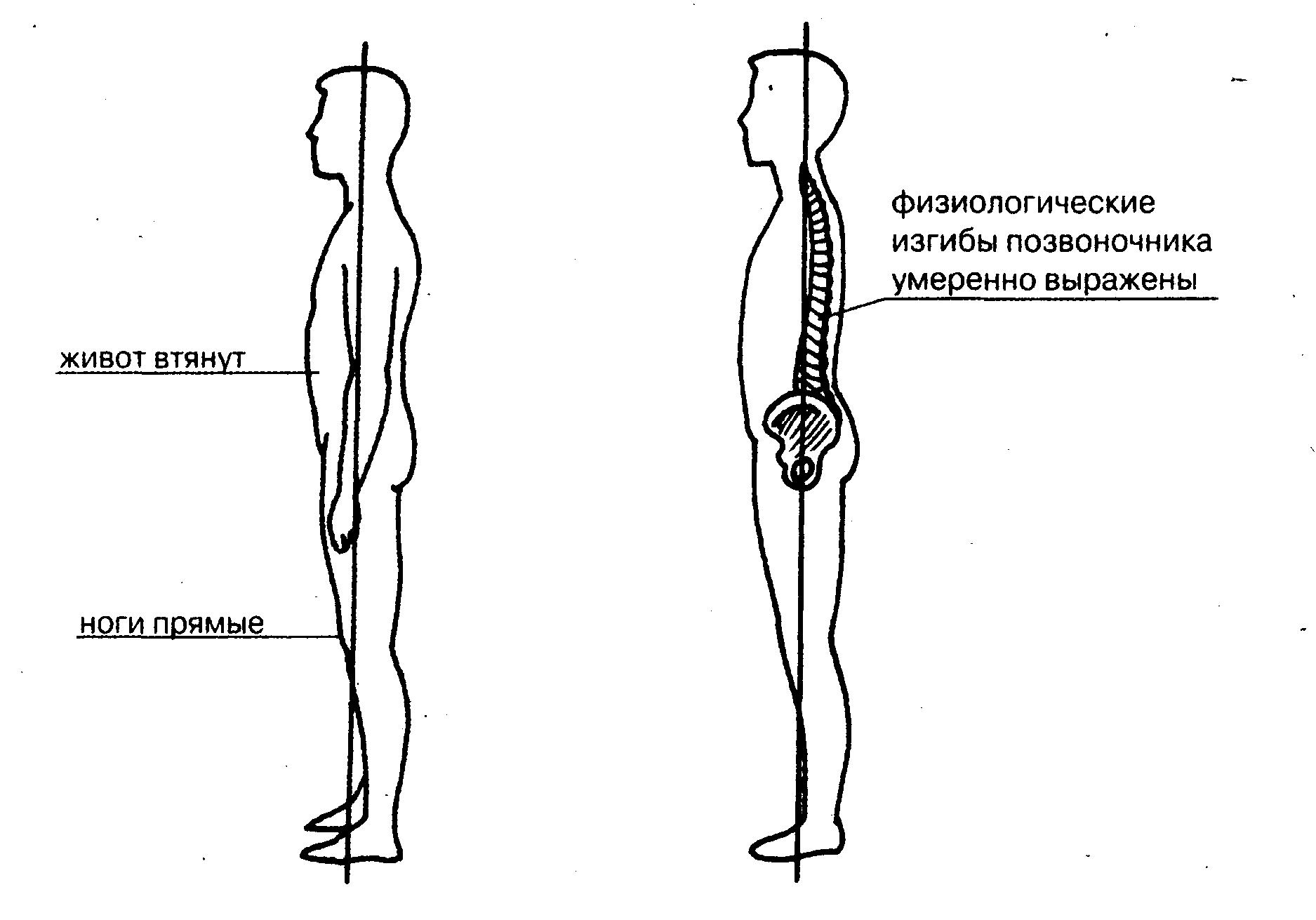 Рисунки осанки человека