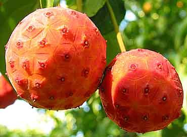 Ossessioni di frutta (17)