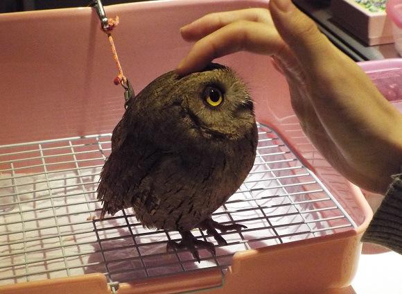 owls-25