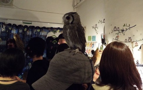 owls-39