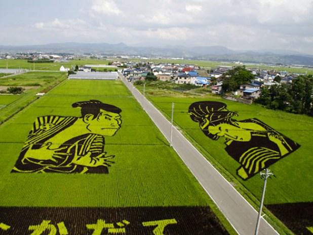 risposta giapponese ai cerchi nel grano pivelli la Tanbo art arte con i campi di riso (7)
