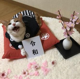 La febbre del sabato Reiwa animali (4)