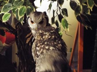 owls-8