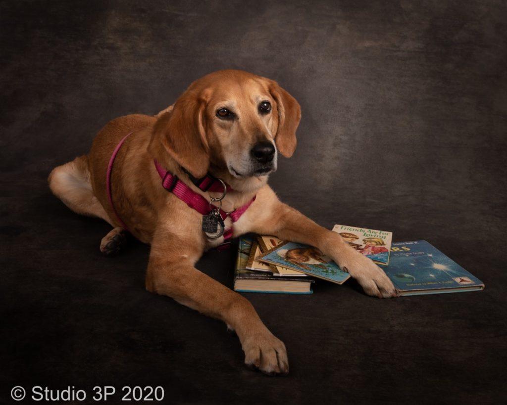 Beautiful animal portraits captured by Studio-3p