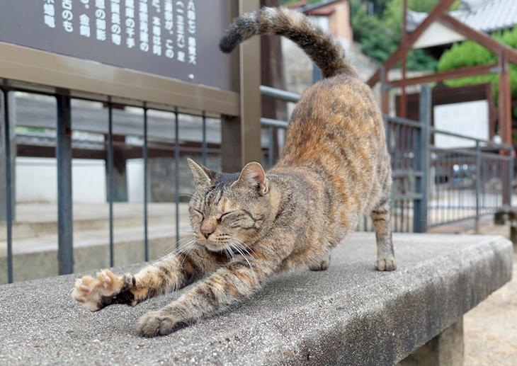猫のポーズ(マルジャリャーサニャ)